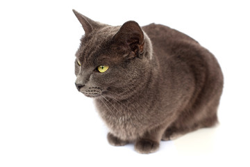 grey cat sitting on white