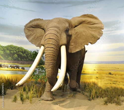 stuffed African Elephant