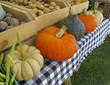 Organic Pumpkins and Squash at Farmers Market