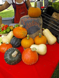 Organic Pumpkin and Squash at Farmers Market