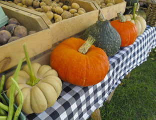 Organic Pumpkins and Squash at Farmers Market