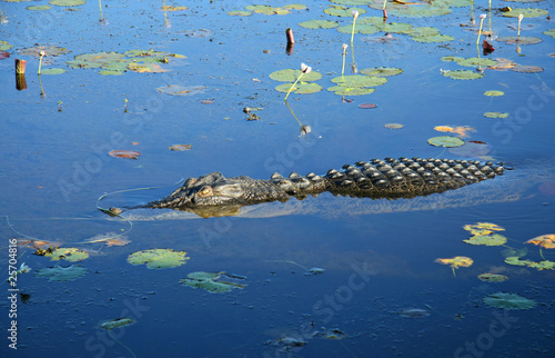 Aluminium Krokodil Saltwater crocodile, Kakadu N/P, Australia