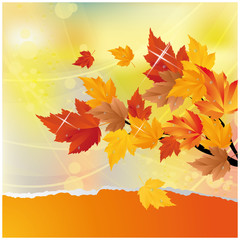 Autumn card with maple tree. vector