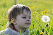 Boy in dandelion meadow.
