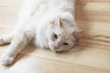 weiße katze räkelt sich auf dem boden