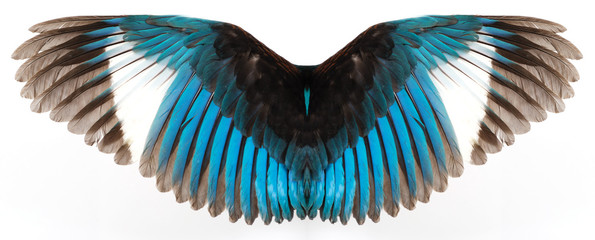 Kingfisher's wings