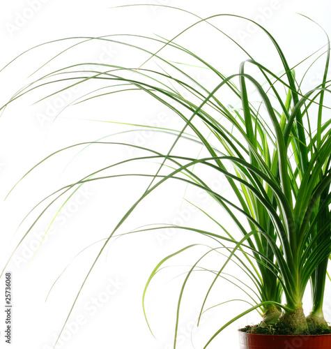 Plante verte photo libre de droits sur la banque d for Acheter des plantes vertes
