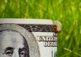 dollar banknote eaten by caterpillar - economic crisis concept