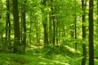 Leinwandbild Motiv Grüner Sommerwald