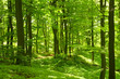 Fototapeten,wald,sommer,grün,buche