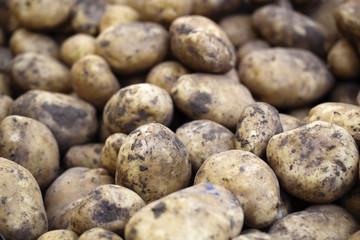 pommes de terre terreuses en vrac