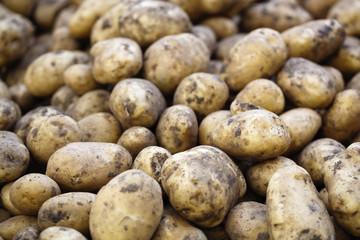 grosses pommes de terre pour locavores