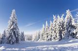 Fototapety schöner Wintertag