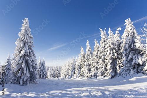 Zdjęcia na płótnie, fototapety na wymiar, obrazy na ścianę : schöner Wintertag