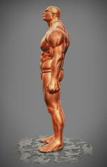muscle man figure side view