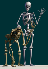 chimpanzee, human skeleton