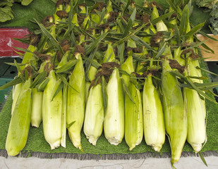 Organic corn at Farmers Market