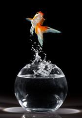 goldfish jump