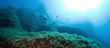 Leinwanddruck Bild - The underwater world