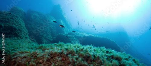 Papiers peints Recifs coralliens The underwater world