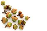 Small group of unripe green acorns on white poster