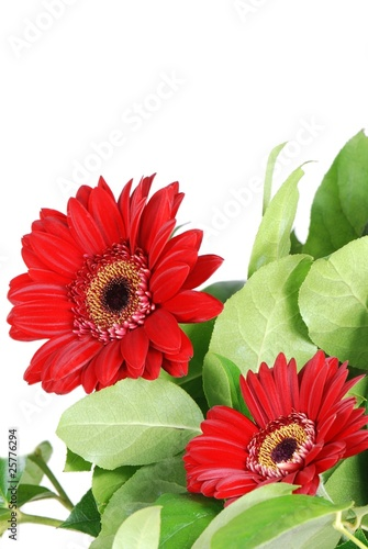 Daisy gerbera flowers with copy space