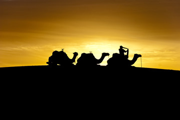Silhouette of camels on a dune at dawn