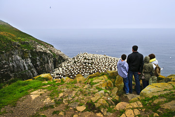 Family visiting Cape St. Mary's Bird Sanctuary in Newfoundland