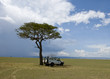 Tree and Jeep in the Serengeti, Tanzania, Africa
