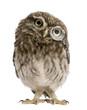 Leinwanddruck Bild - Little Owl wearing magnifying glass, Athene noctua