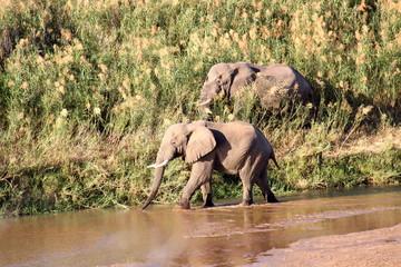 Dos elefantes - sudafrica