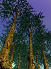 Sequoias by night