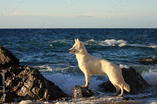 sguardo di lupo al mare