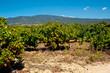 vignes provençales