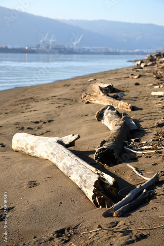 Driftwood along the Willamette River.
