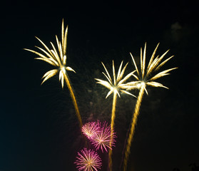 fireworks as palm at night