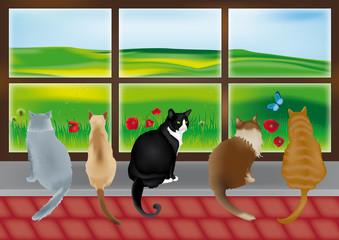 gatti davanti a una vetrata