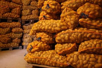 frische kartoffelernte