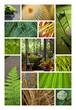 Véranda serre jardin zen habitat nature