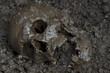 Real human skull configured as dead body on soil as crime scene.