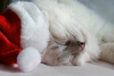 sleeping santa kitty
