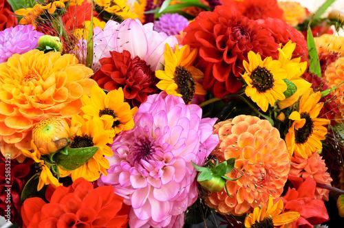 Fotobehang Dahlia Dahlien, Herbstfarben, Schnittblumen