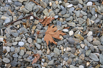 pebbles leafs sea water tree stones autumn