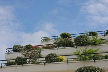arbustes taillés sur terrasse