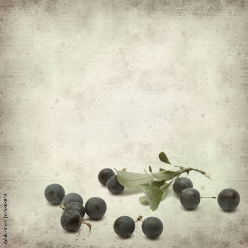 textured old paper background with sloe © Tamara Kulikova