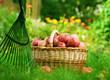 Fototapeta Kosz - Organiczny - Owoc