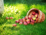 Fototapeta kosz - zdrowie - Owoc