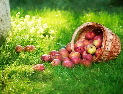 Zdrowe jabłka ekologiczne w koszyku.