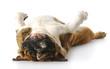 dog upside down
