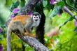 The squirrel monkey.